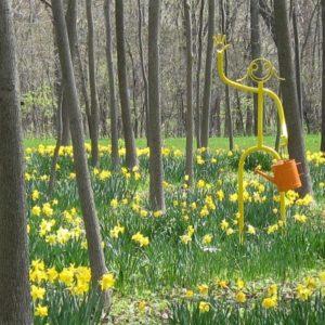 Daffodils 2011 075